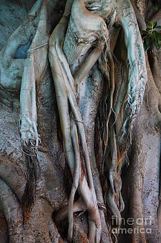 LHJB Photography - Tree Art