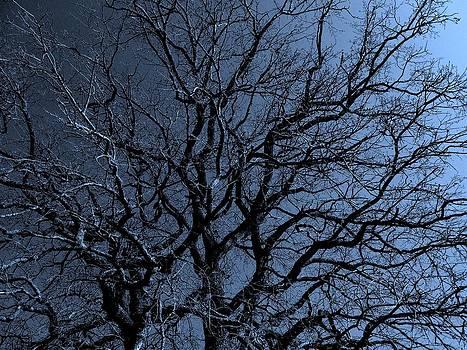 Tree by  art I FABRY