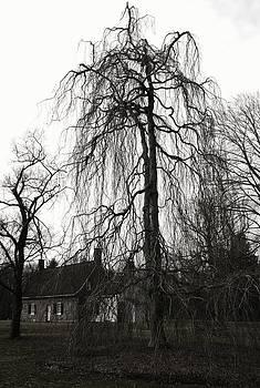 Robin Mahboeb - tree at de Wint house