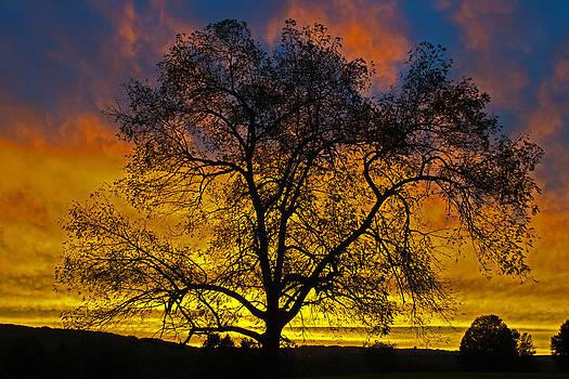 Tree At Sunset by David Hintz