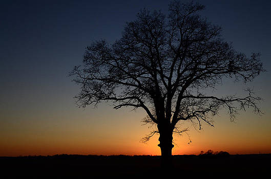 Tree at Sunset by Michael Donahue