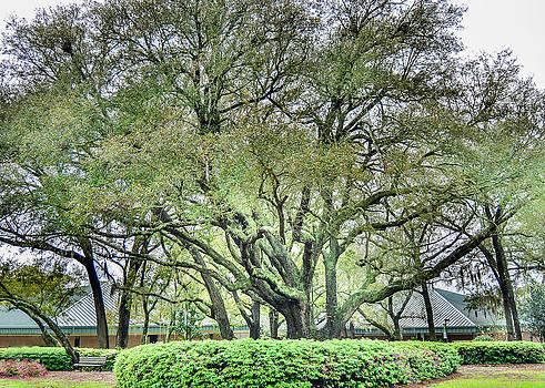 Tree at UWF by Jon Cody