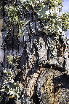 Ginette Callaway - Tree Bark along the Chattahoochee River Georgia
