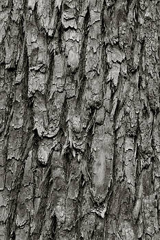 Tree Bark by Amarildo Correa