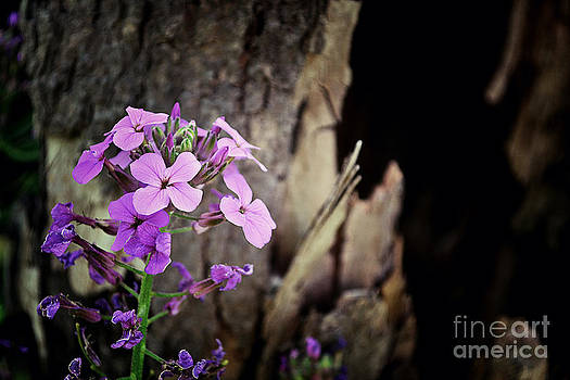 Tree Bark And Pink Purple Wildflowers by Miss Dawn
