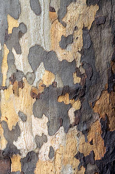 Tree Bark by Chris  Clark