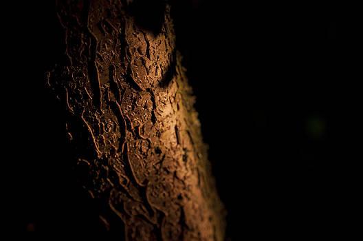 Tree bark by David Isaacson