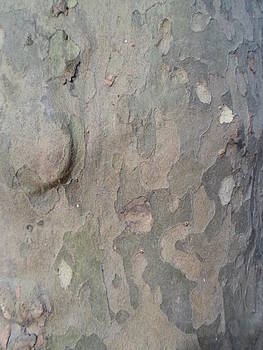 Tree bark by Jenna Mengersen
