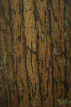 Tree Bark  by Tina Stoffel