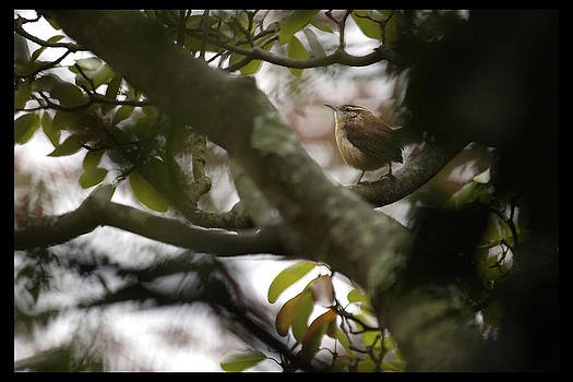 Daniel Kasztelan - tree bird