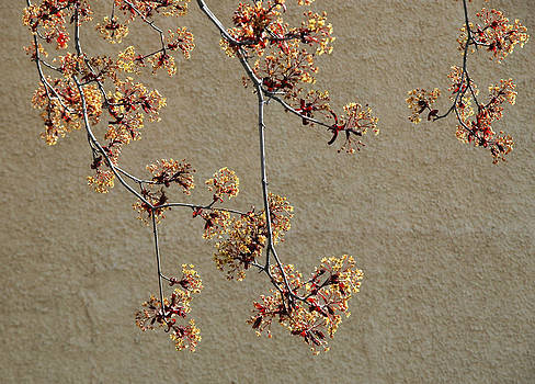 Tree blossoms. by Rob Huntley