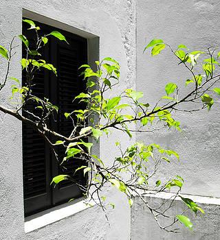 Ramunas Bruzas - Tree Branch