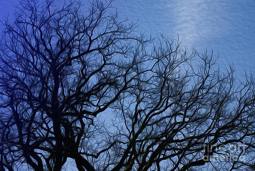 Tree branches by Nur Roy