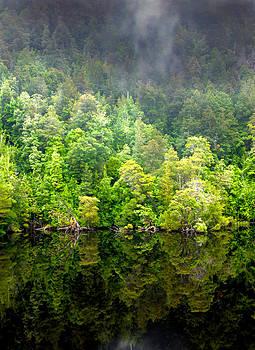 Tree Breath  by Glen Johnson