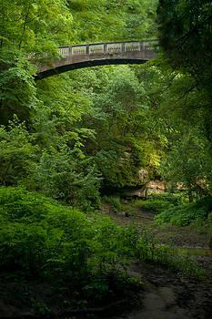Tree Bridge by Jennifer Englehardt