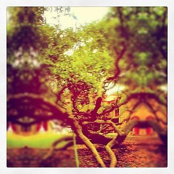 #tree #building #school by Eric Perez