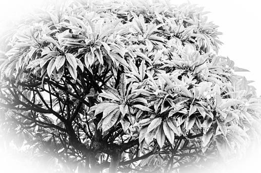 Tree Bush Vignette by Lisa Cortez