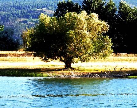 Tree by a pond in Montana by Larry Stolle