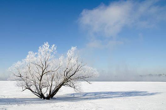 Tree by the River Covered with Hoar Frost. by Rob Huntley