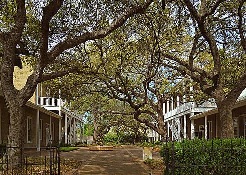 Christine Till - Tree canopy in San Antonio TX
