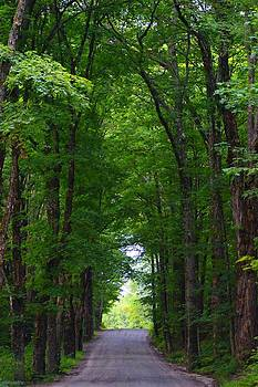 Tree Canopy by Sharon L Stacy
