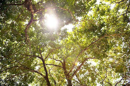 Tim Hester - Tree Canopy