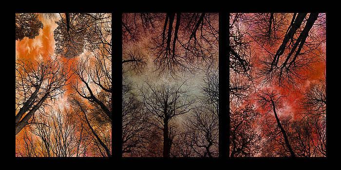 David Pringle - Tree Canopy Triptych