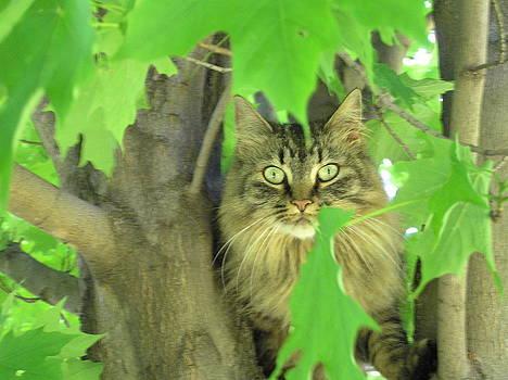 Tree Climber by Marisa Horn