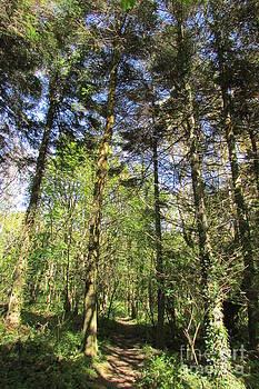 Tree cloistered by Jenny A Jones