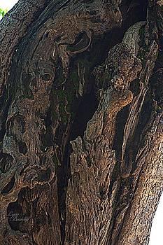 Lynn Bawden - Tree Closeup
