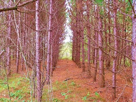 Tree Corridor by Dave Dresser