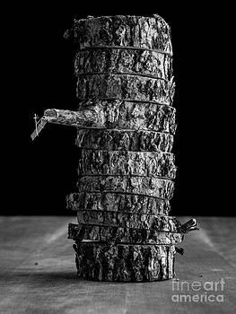 Tree Deconstructed II by Edward Fielding