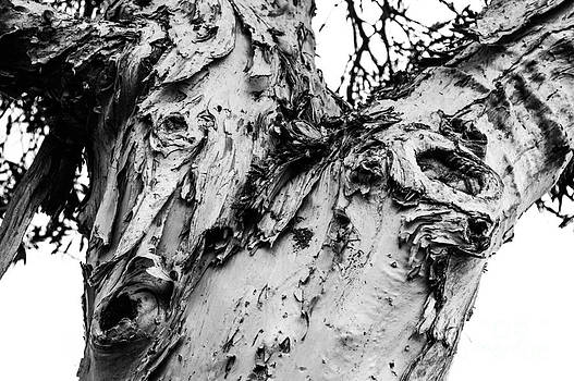 Tree Face No Color by Lisa Cortez