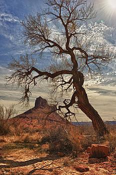 Tree Frame by Jeff R Clow