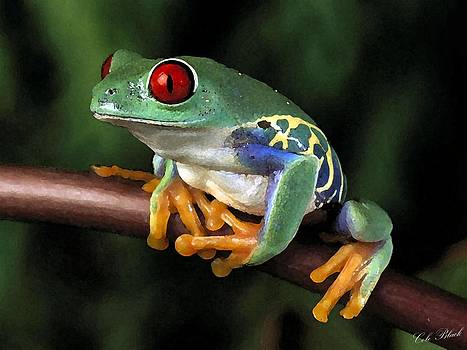 Tree Frog by Cole Black