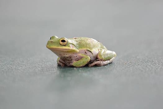 Tree Frog by Courtney Geck