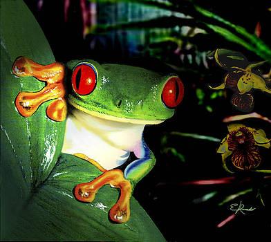 Tree frog by Edwin Rosado