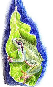 Ellen Miffitt - Tree Frog