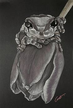 Tree Frog on Tulip by Cristel Mol-Dellepoort