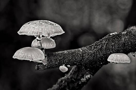 Tree fungi by Pete Hemington