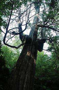 Tree Giants  by Scott Ware