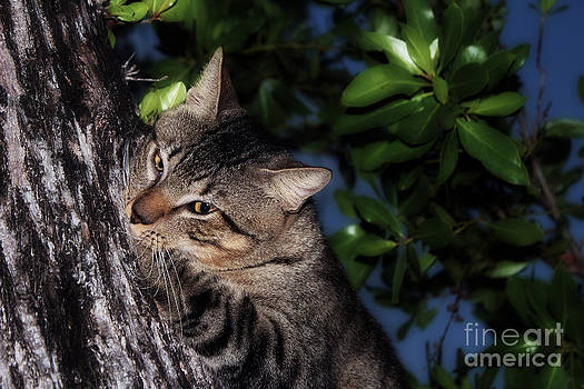 Tree Hugging Cat by Marjorie Imbeau