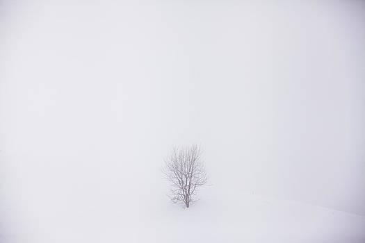 Tree I by Toma Bonciu