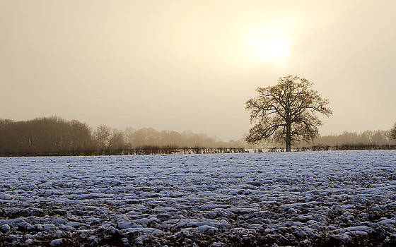 Fizzy Image - tree in a field on a snowy day