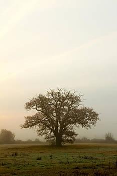 Fizzy Image - tree in a misty english field