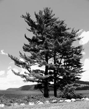 Tree in Black and White by Terry Decker