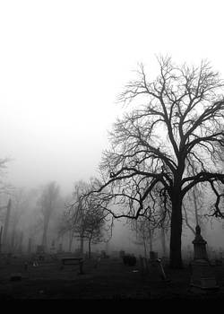 Tree in Fog by Kelly E Schultz