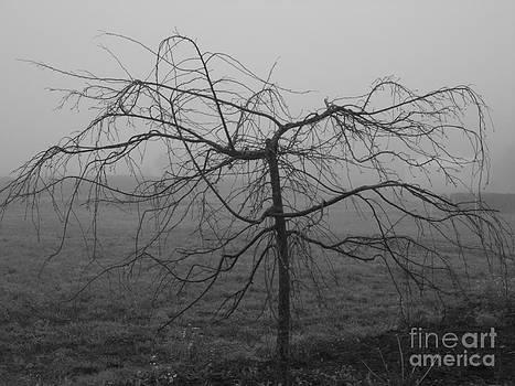 Tree in Fog by Stacy Frett