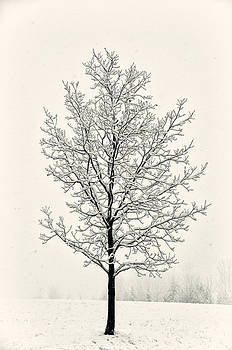 Tree in Heavy Snow by Joseph Duba