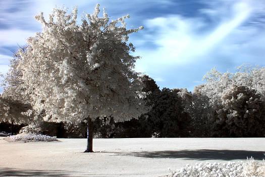 Tree in Infrared by Arnold Nagadowski